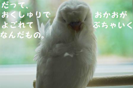 4DSC_0412m.jpg