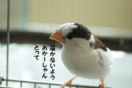 DSC_0955m.jpg