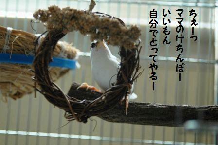 DSC_0964m.jpg