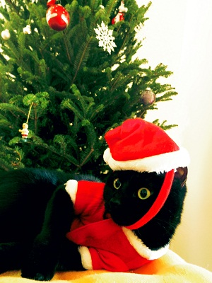 ジジ クリスマス2014
