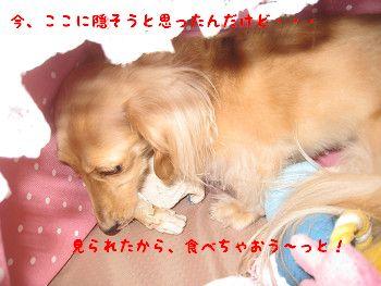 resize0036.jpg