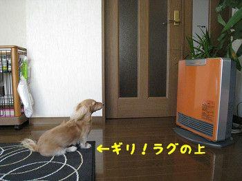 resize0112.jpg