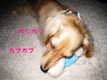 resize3946_20120629114012.jpg