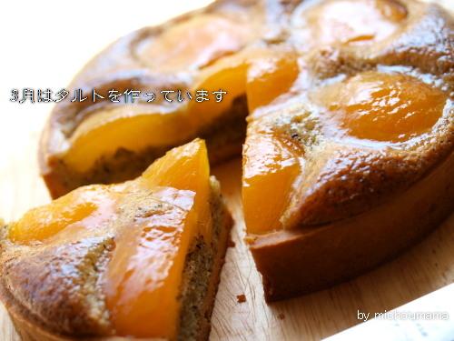 abricot8.jpg
