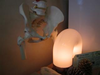 骨格模型・・