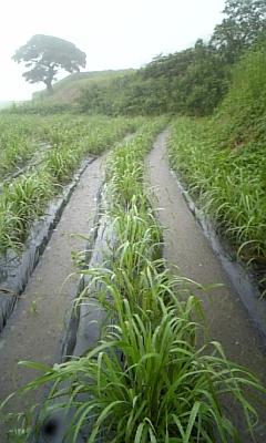 大雨通路1