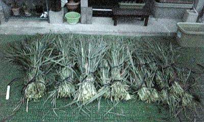 収穫量 (1)
