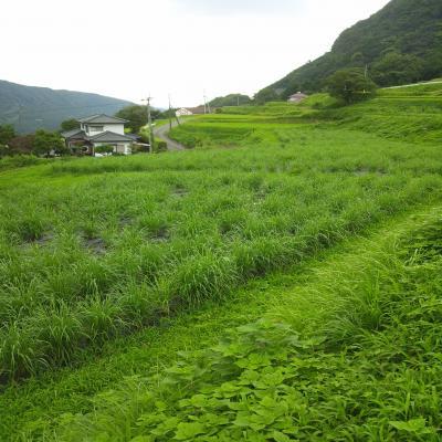 0815立野風景1_convert_20120815191529