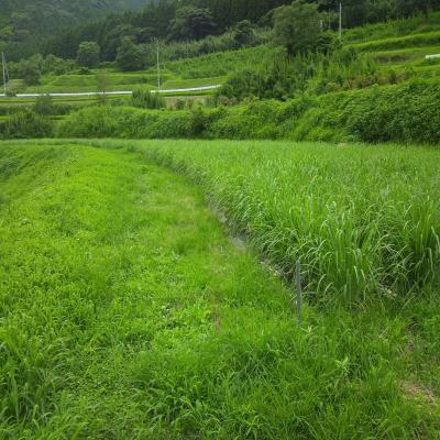 0815立野風景2_convert_20120815191547