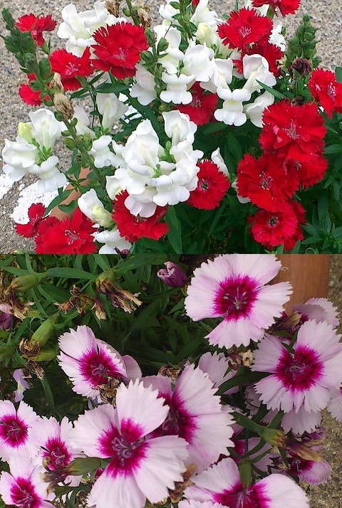 12.6.5宝塚お花