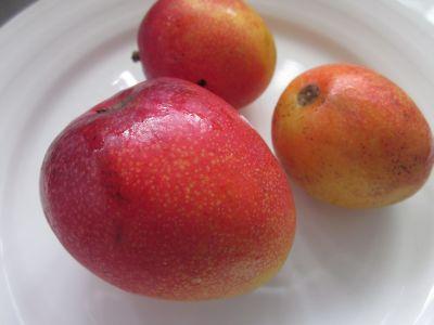 mango0714.jpg