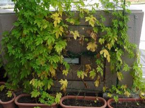 go-ya2012-08-01_convert_20120801225952.jpg