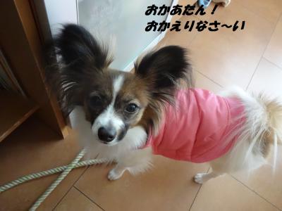 縺翫°・励j縺ェ縺輔>_convert_20130201062628
