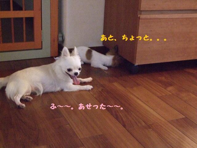 BLOG6436.jpg