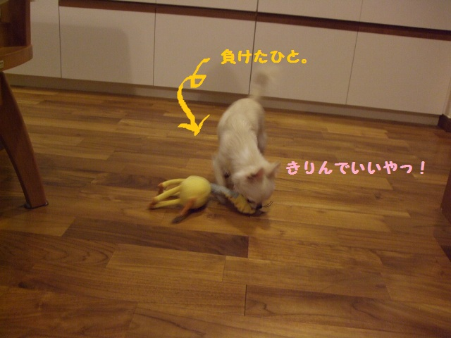 BLOG6835.jpg