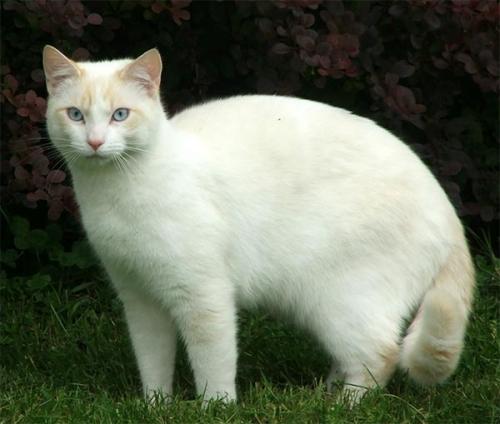 ねこ 白猫1