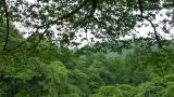 20120624原生の森山中城跡01