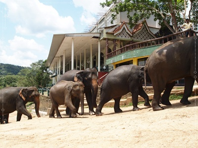 象の孤児院-スリランカ- 185