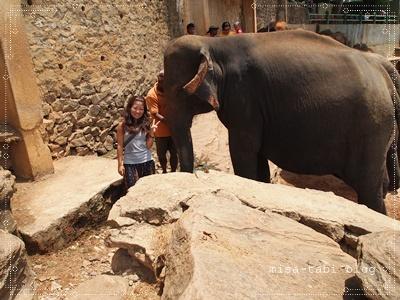 象の孤児院-スリランカ- 173