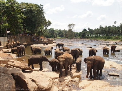 象の孤児院-スリランカ- 162