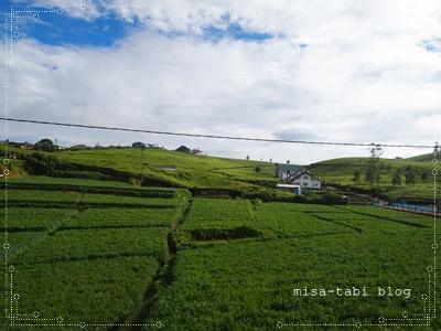ヌワラエリヤ-スリランカ- 264