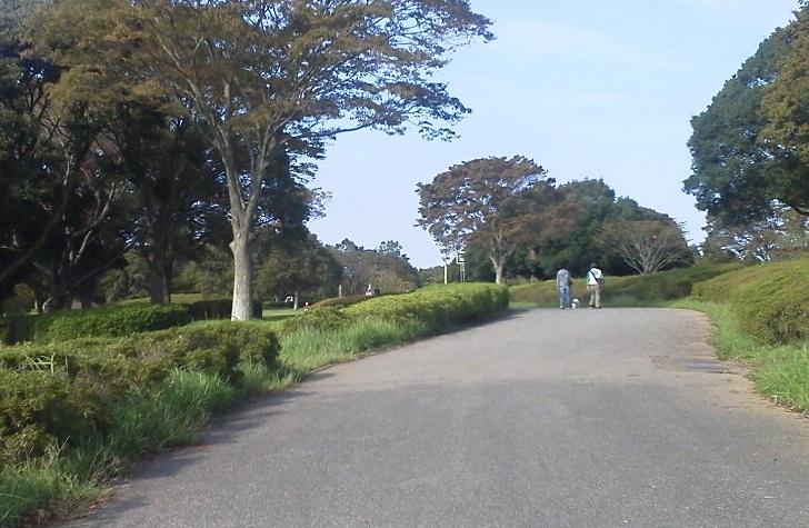 昭和の森 (9)