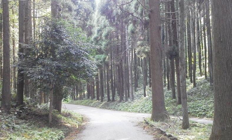 昭和の森 (4)