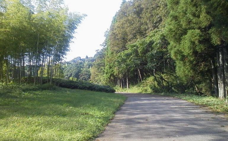 昭和の森 (6)