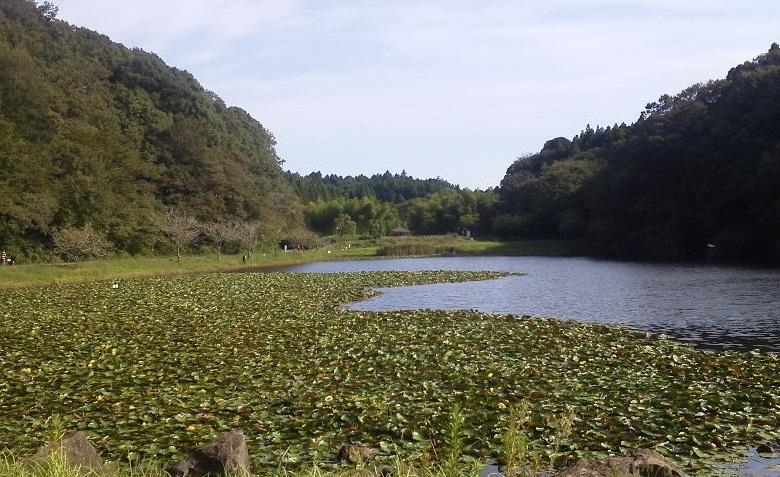 昭和の森 (7)