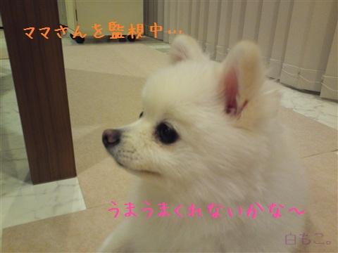 20120908_2.jpg