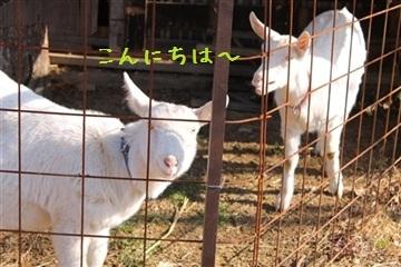 20121216_5.jpg