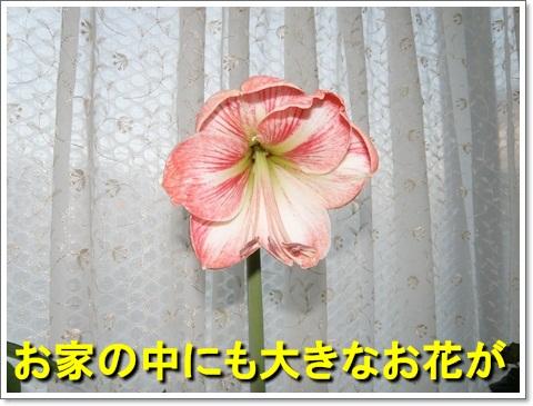 P5050122.jpg