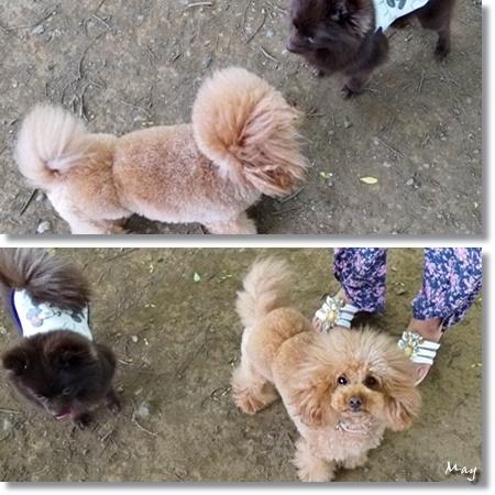 cats3_20120606104009.jpg