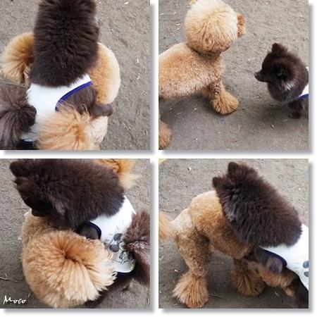 cats4_20120606105053.jpg