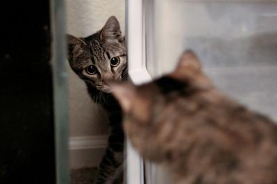 猫 見合わせる