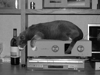 猫 C800f ラックスマン