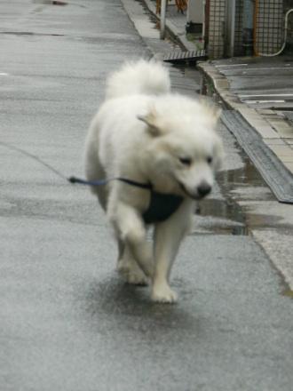 201204_広島6