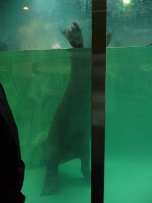 201211_水族館10