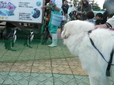 201211_水族館13