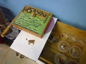 ダンゴムシ実験