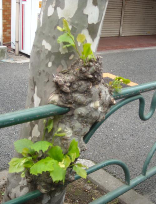 20120610東急ストア錦糸町 001