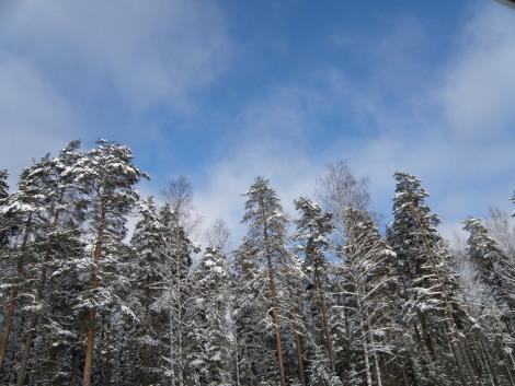 Maisema blue sky
