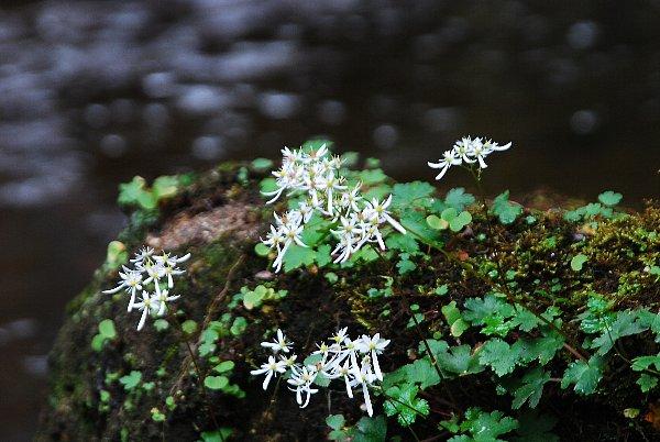 daimonzisou10-306.jpg