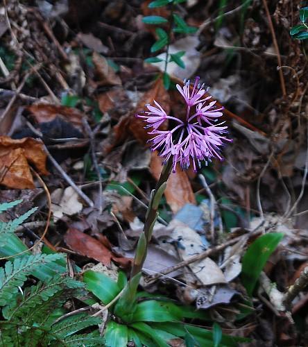 syouzyoubakama0324.jpg