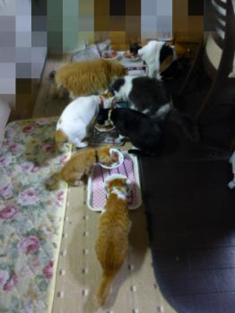2012・10・19 みんなでご飯