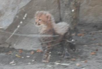 多摩動物園 027