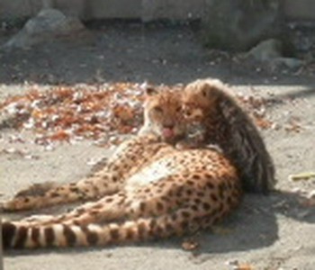 多摩動物園 029