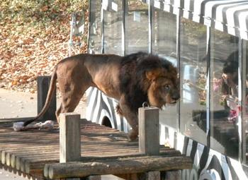 多摩動物園 020