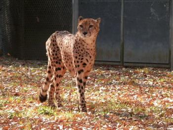 多摩動物園 023