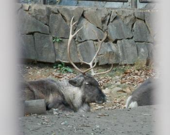 多摩動物園 035